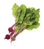 Beets with green tops